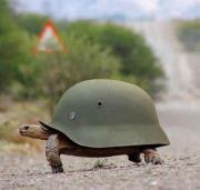 Χελώνα με ναζιστικό κράνος